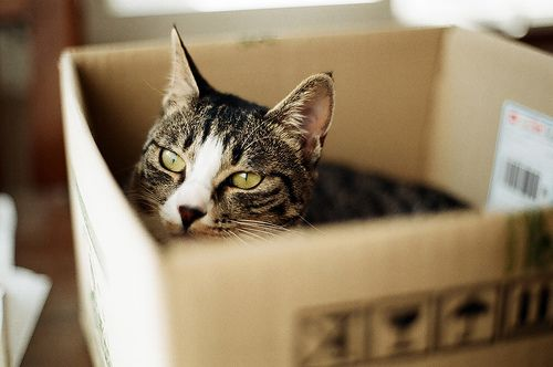 Cat In Box Funny Cute Cats Cat Shelter Cat Rescue Shelter
