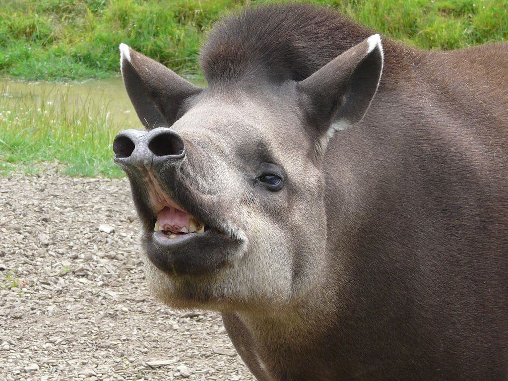 Animals With Weird Noses 9