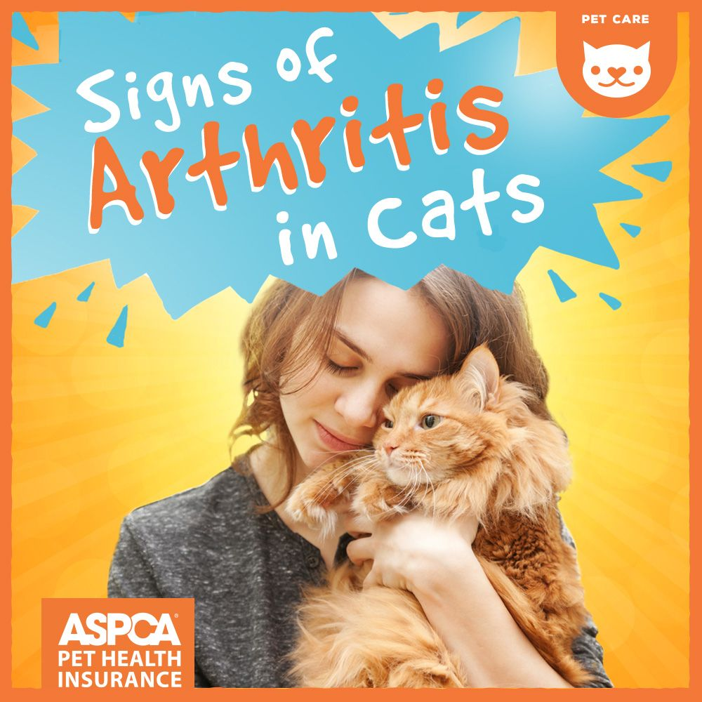 Signs of Arthritis in Cats (With images) Cat care, Cat