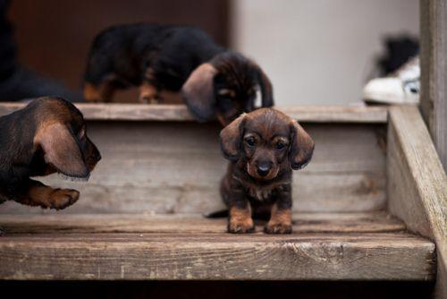 dachshunds make me melt!
