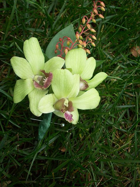 Jade Green Dendrobium Orchid Boutonniere Orchid Boutonniere Orchids Dendrobium Orchids