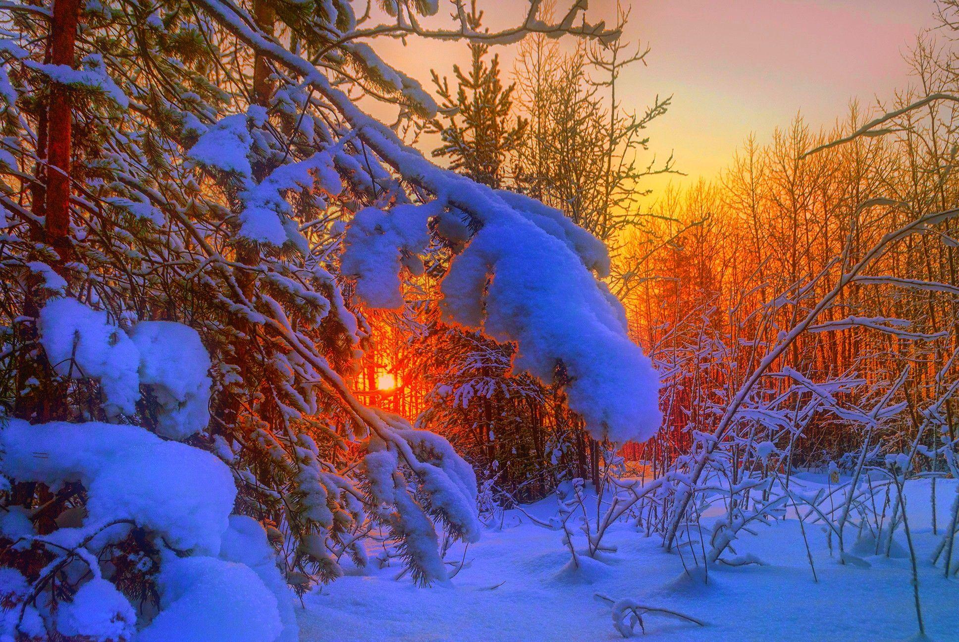 Winter Sunset Nature Trees Landscape Evening Stunning Snow