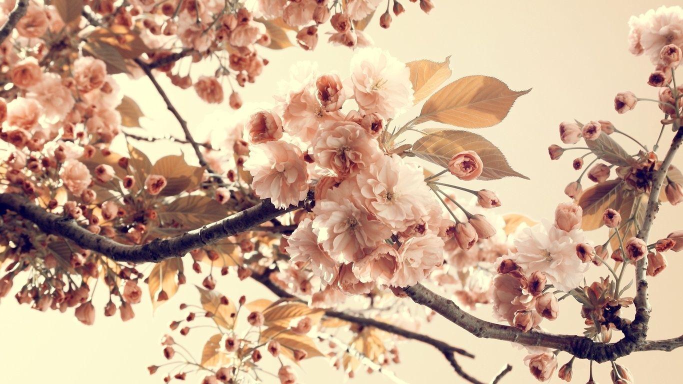 Fondos Vintage Flores Para Fondo De Pantalla En Hd 1 Hd Wallpapers