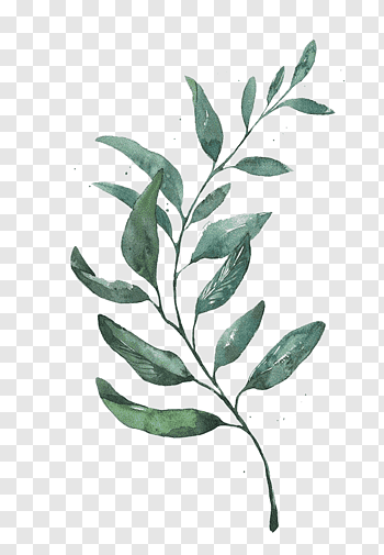 Watercolor Painting Drawing Leaf Printmaking Watercolor Leaves Green Leafed Plant Free Png Leaf Drawing Watercolor Flowers Paintings Leaf Illustration