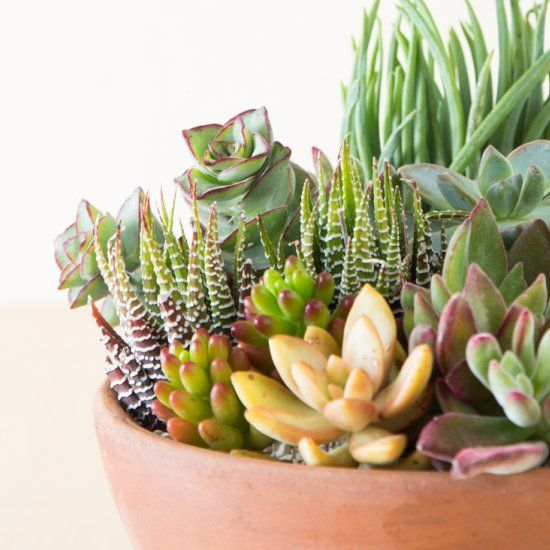 Check out these tips for growing succulents that you likely haven't heard before! You can grow succulents anywhere if you know how!
