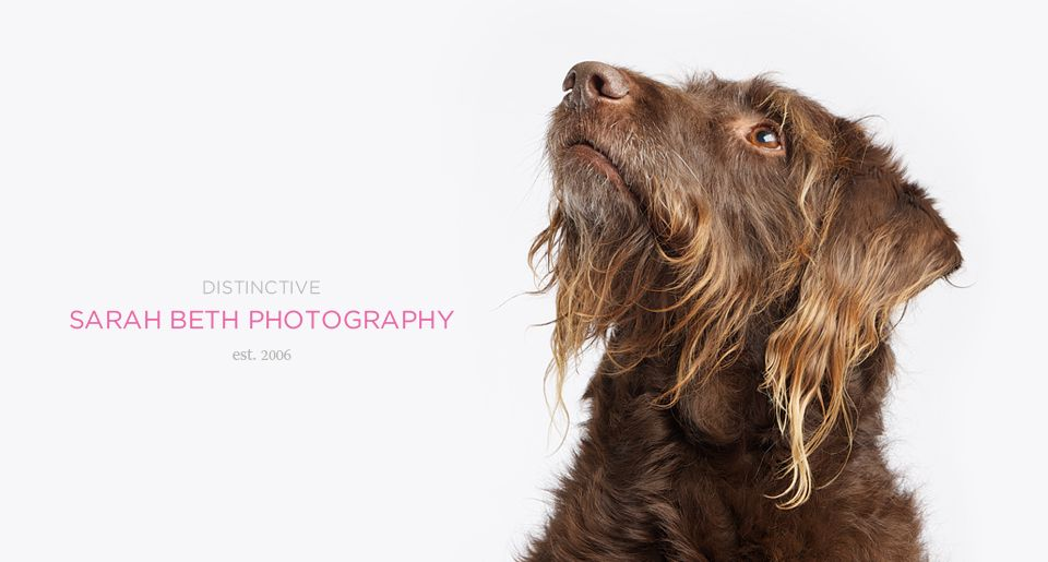 Friends Dog Photography Animal Photography Pet Photographer