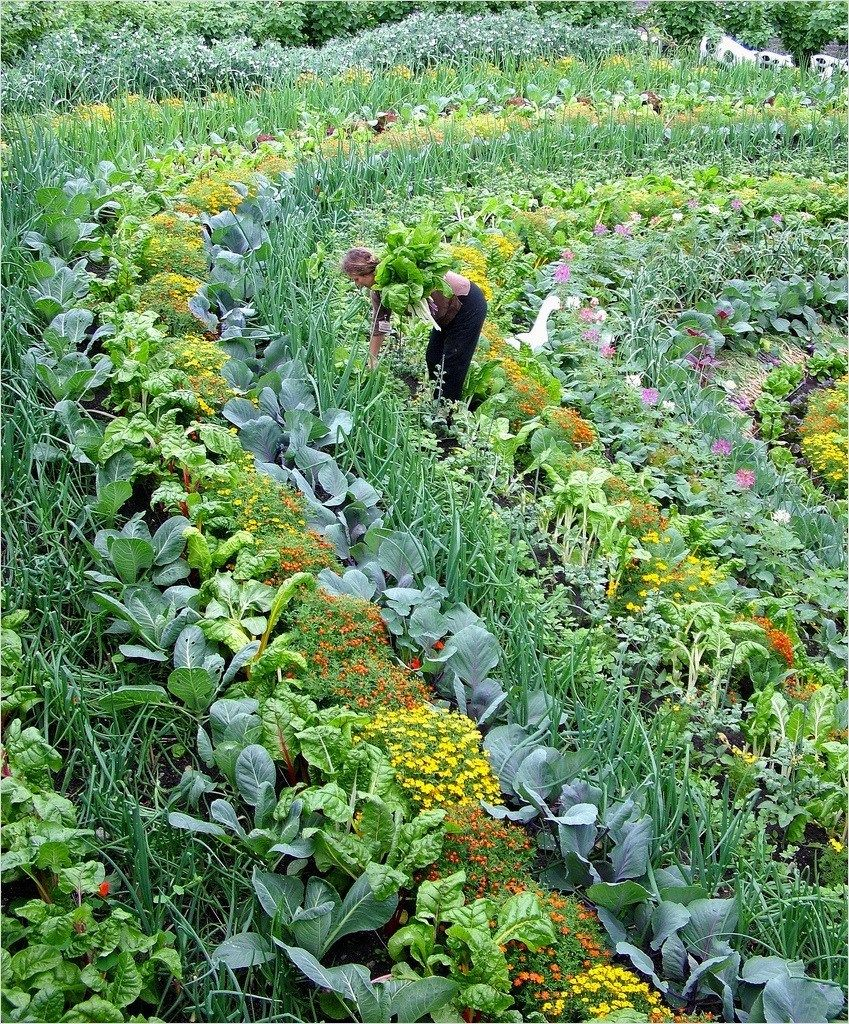 Most Beautiful Vegetable Gardens 11 Садоводство 400 x 300