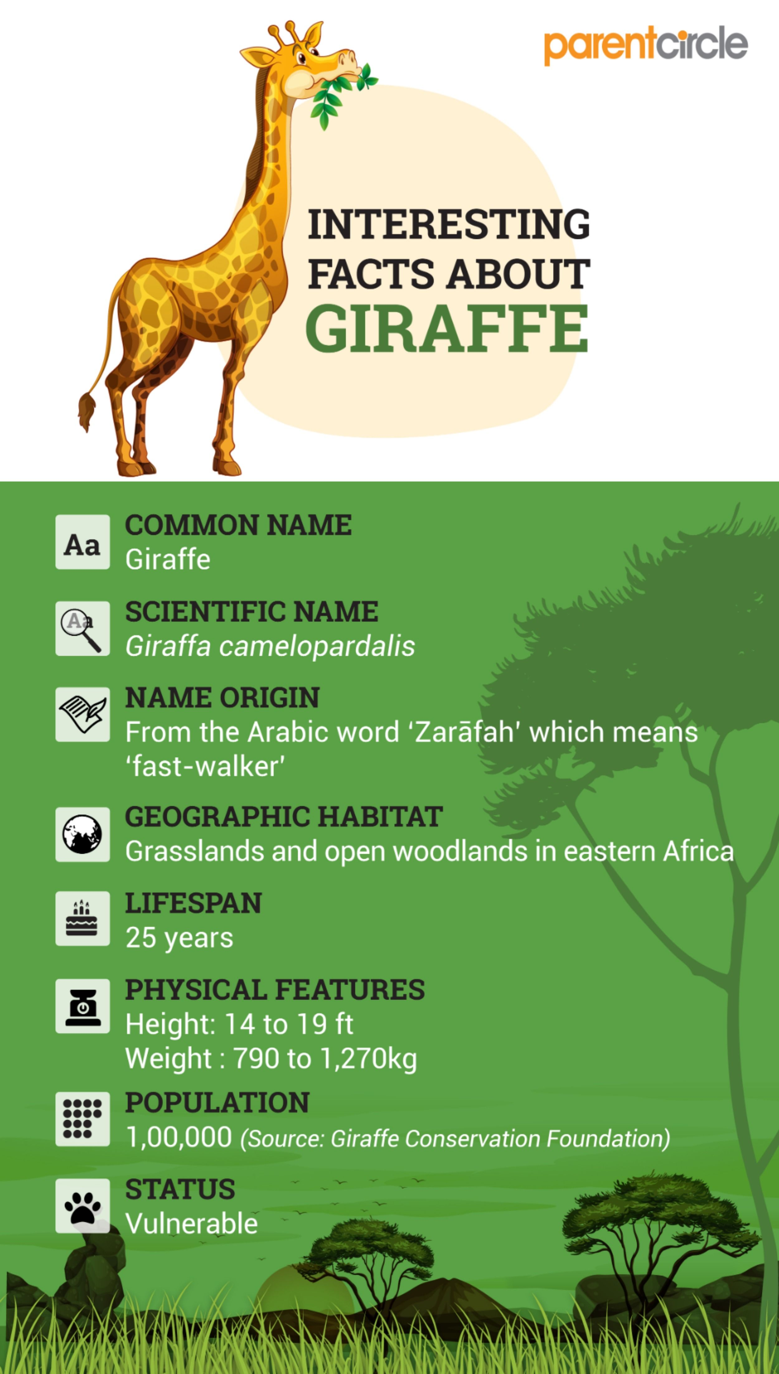 Fun Facts About Giraffe For Kids In