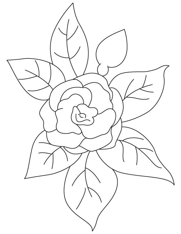 Pink Camellia Coloring Page
