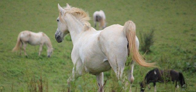 Le Cheval de 3 - http://www.activexplore.com/activity/le-cheval-de-3/