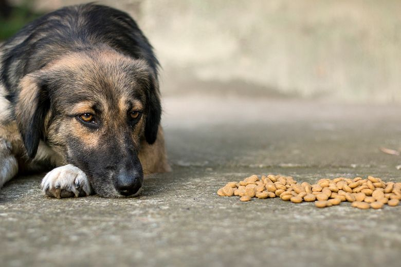 Please Stop Buying Your Pets Grain Free Food Free Food Free