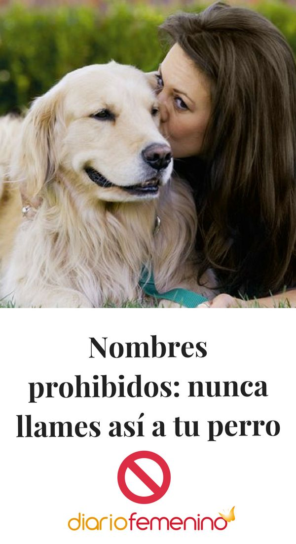 Nombres Prohibidos Nunca Llames Así A Tu Perro Perros De Famosos Edad Perros Humanos Entrenamiento Perros