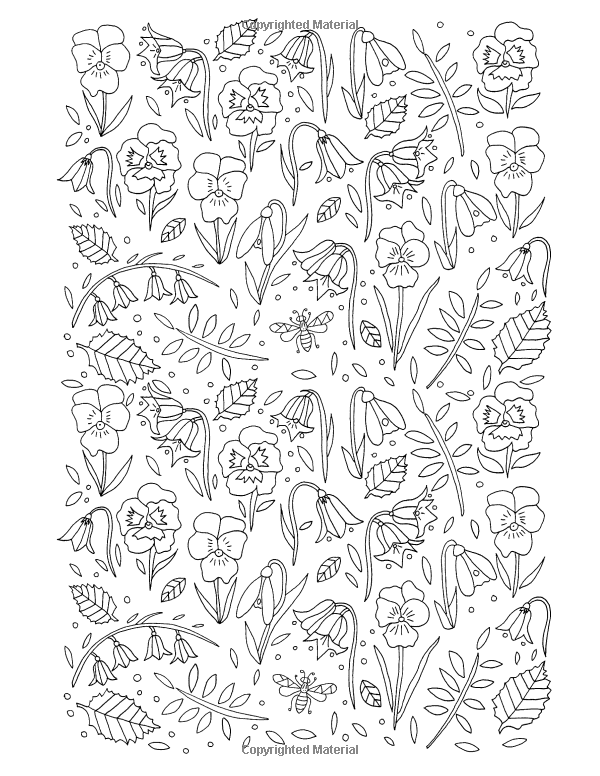 Amazon Flower Bee Colouring Book 9781908072948 De Ann