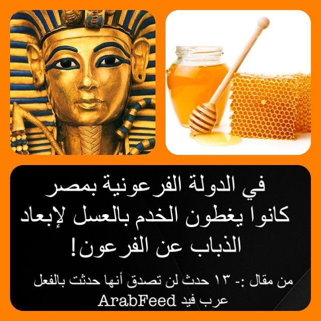 في الدولة الفرعونية بمصر كانوا يغطون الخدم بالعسل لإبعاد الذباب عن الفرعون Did You Know Story