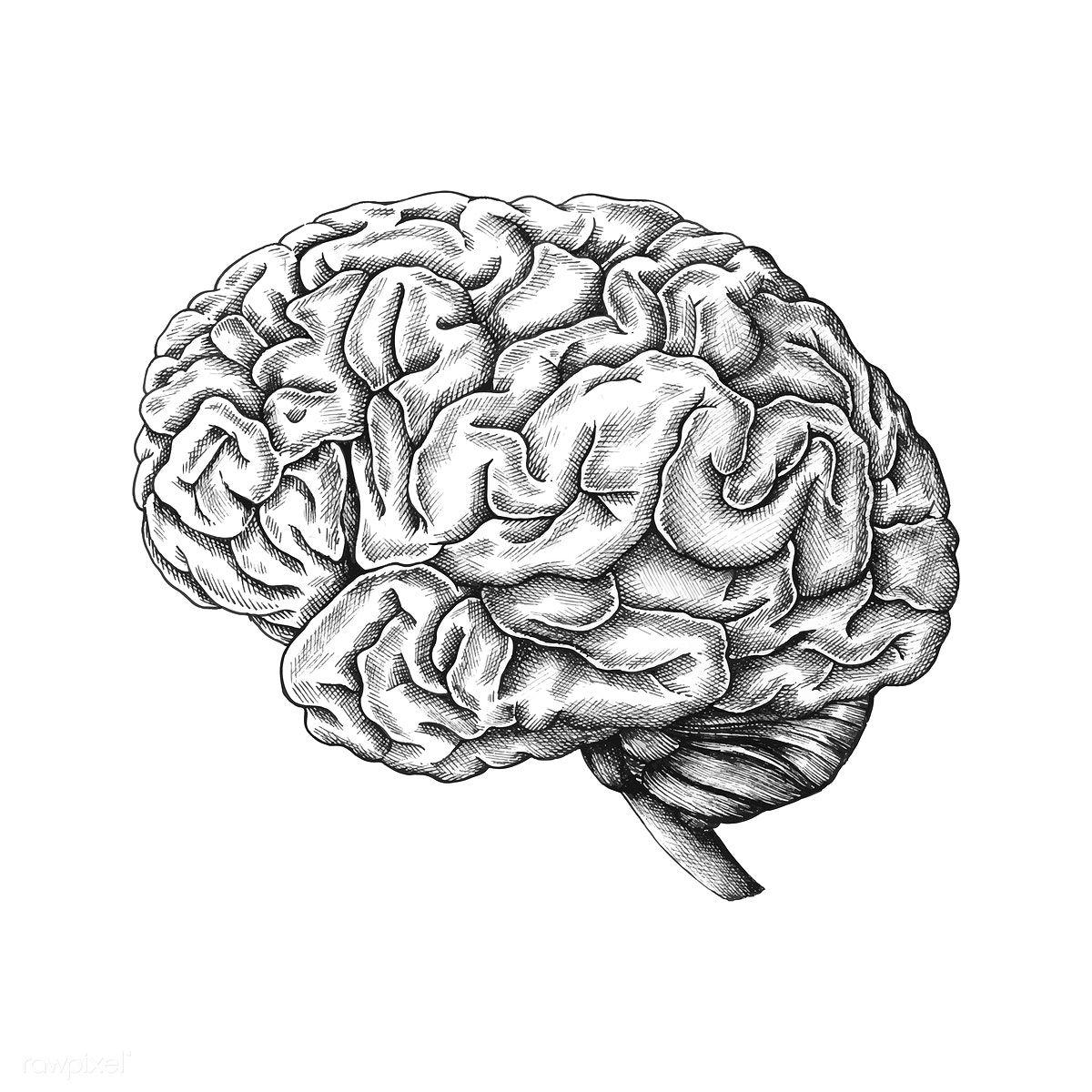 Download premium vector of Hand drawn human brain 410908