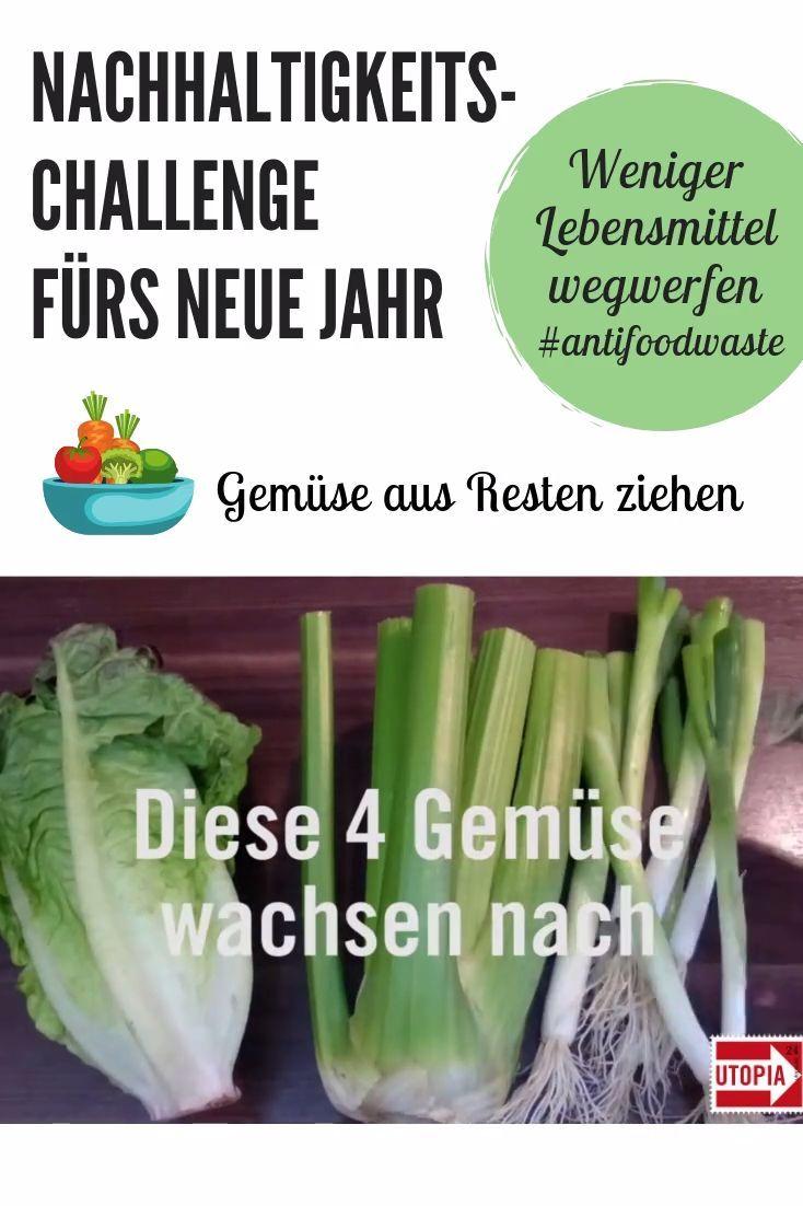 Gemüse selber ziehen: 8 Lebensmittel, die immer wieder ...