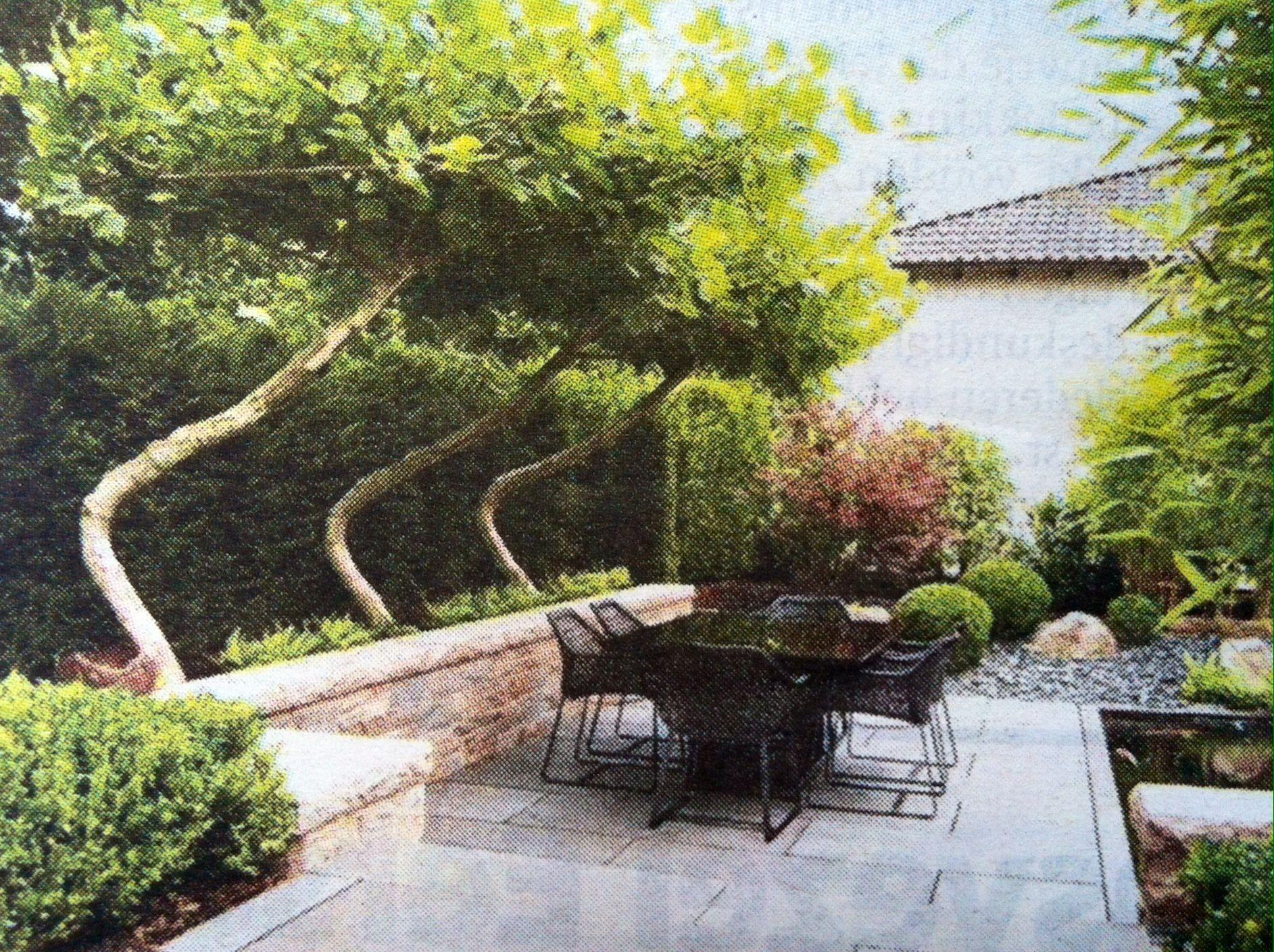 Tree The Swing  Boomkwekerij Van
