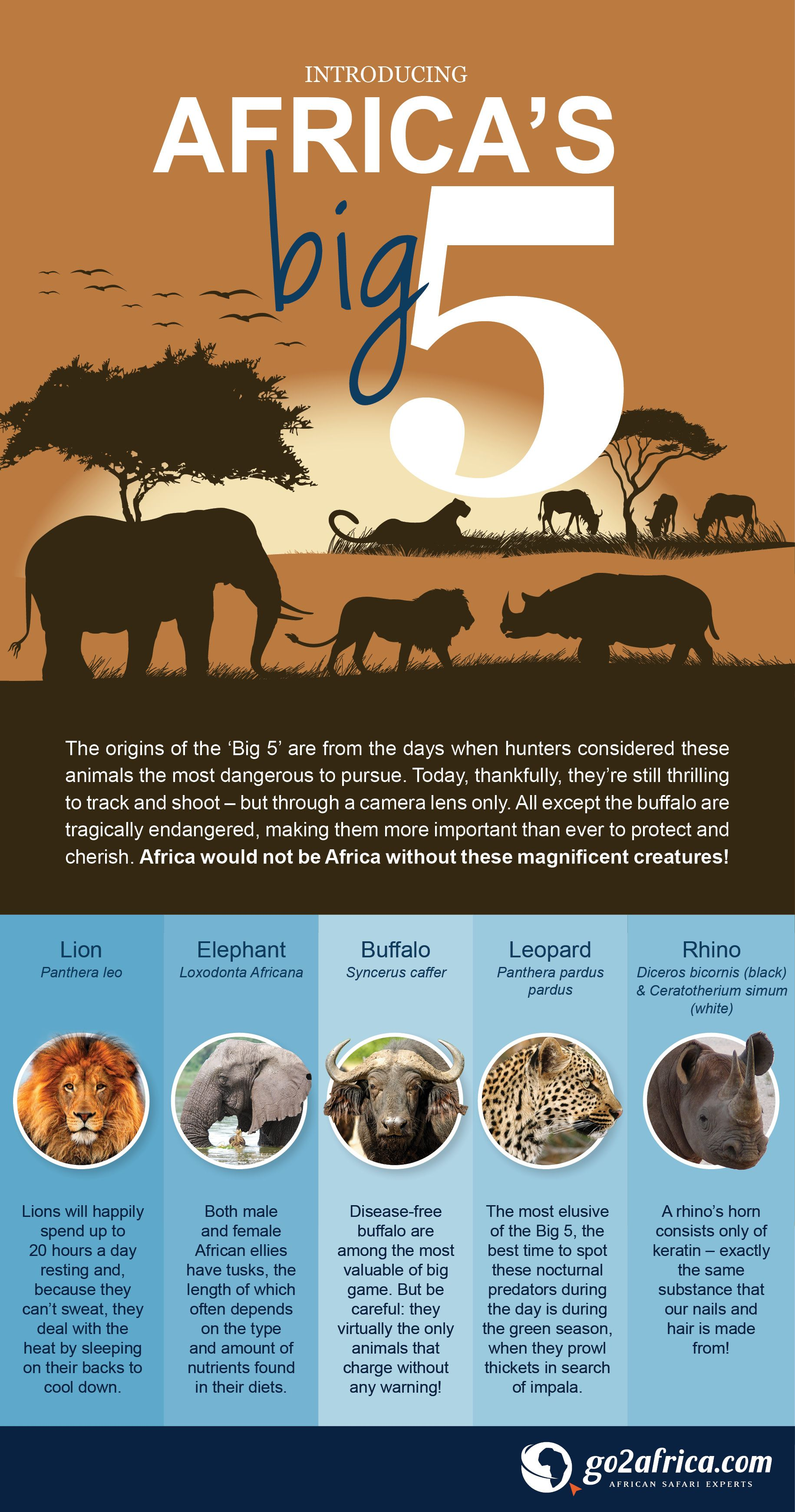Africa S Big 5 Infographic Africa Safari Infographic