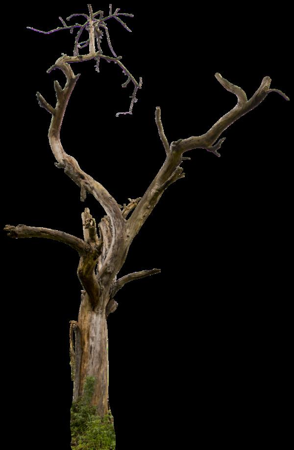 Dead Tree 04 Hq By Gd08 On Deviantart Tree Tree Sketches Tree Study