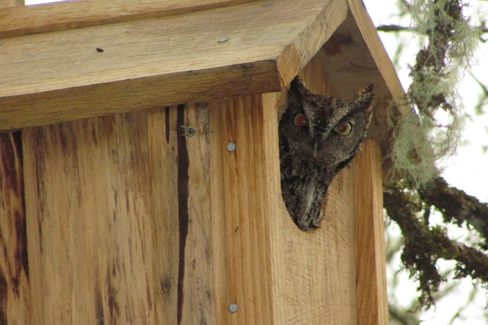 1000+ images about owl houses on pinterest | woodworking plans