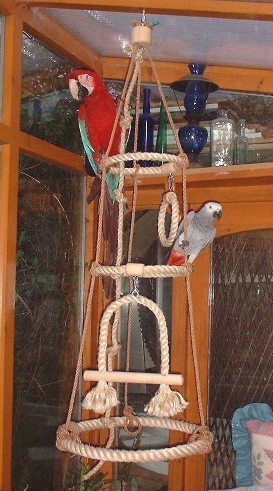 Pin by Nichole W. Sanchez on parrots Parrot toys, Parrot