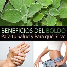 Beneficios Del Boldo Para Tu Salud Y Para Qué Sirve La Guía De Las Vitaminas Natural Herbs Natural Health Remedies Herbs
