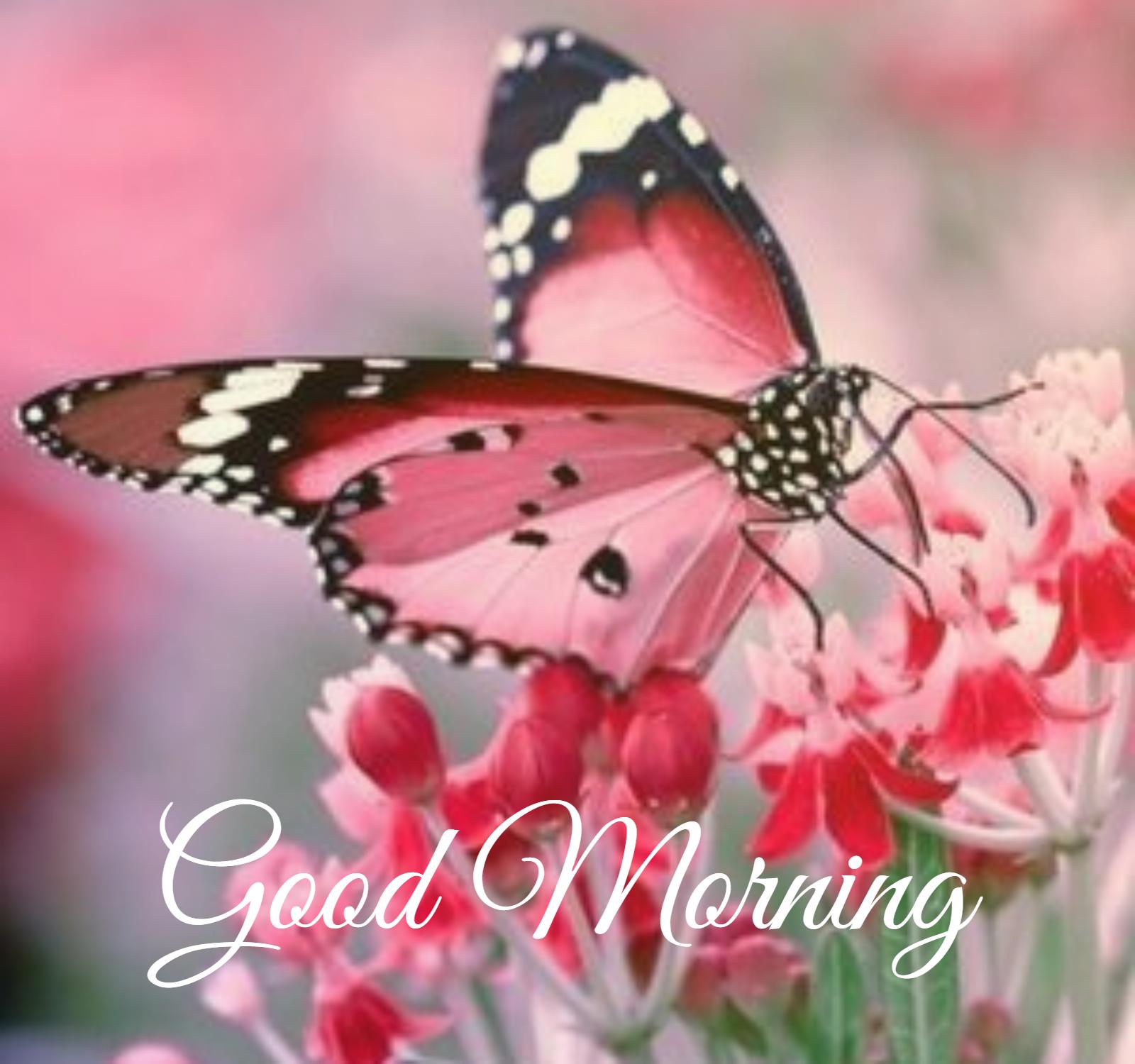 Good Mornig Butterfly Good Morning Images Disney Phone Wallpaper