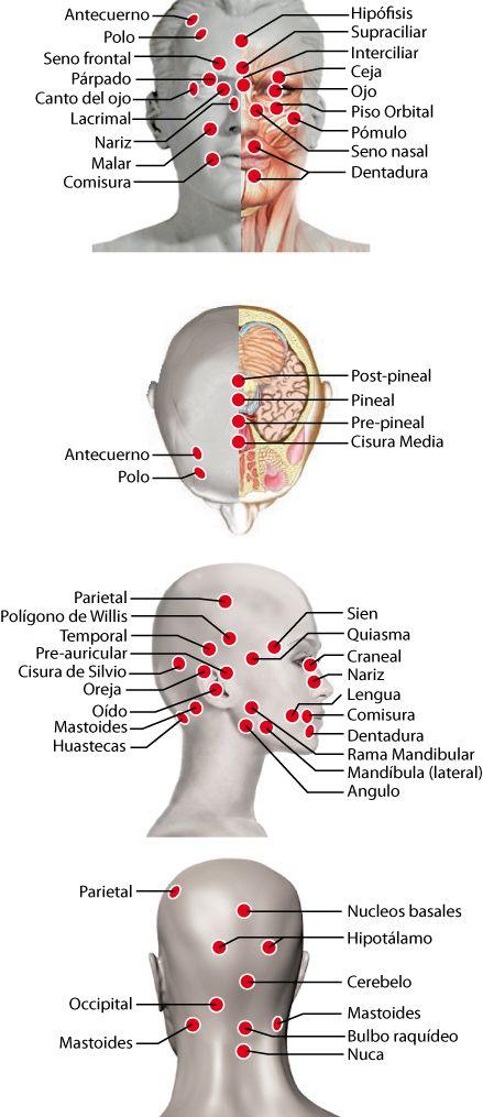 centros de acupuntura para adelgazar en valencia