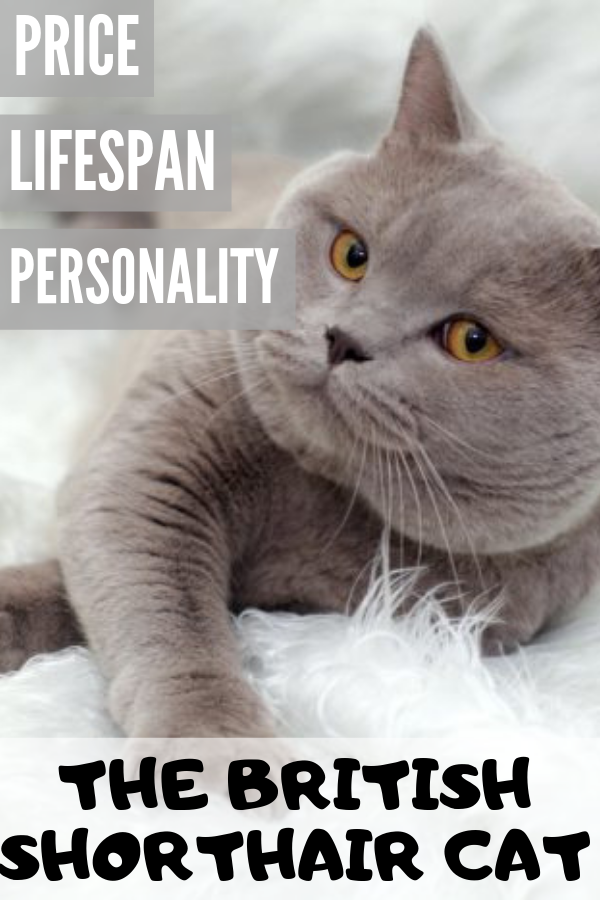 Pin On Cats And Other Fun