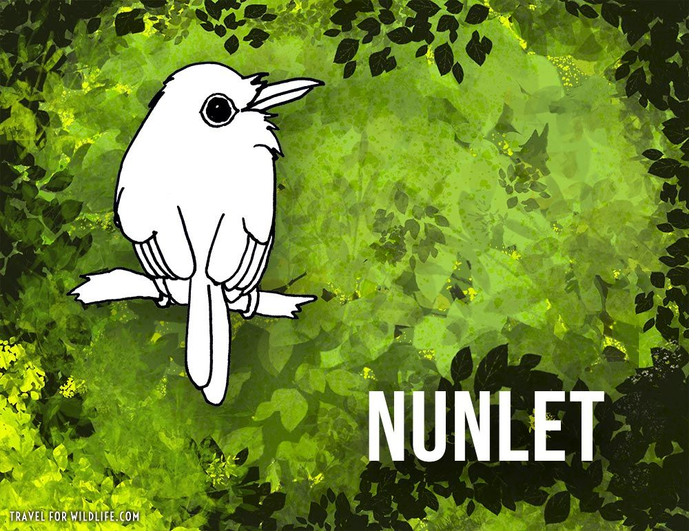 37 Animals That Start With N Animal Design Poster Bird