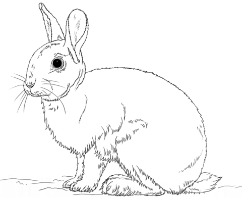 Cute bunny rabbit coloring page from Rabbits category. Select from 25105 printable crafts of cartoons, nature, animals, Bible and many more.