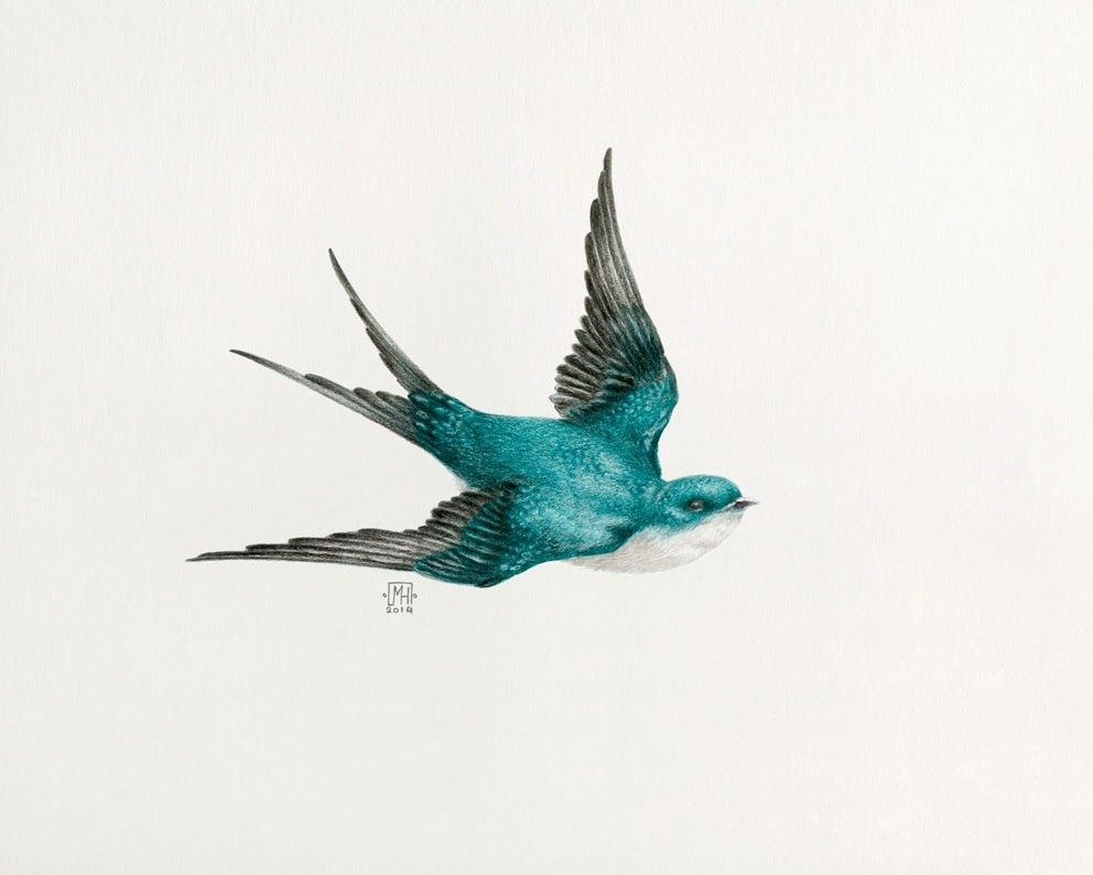 M lanie heller illustration hirondelles en vol flying - Dessin oiseau en vol ...
