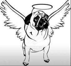 pin jawine noortwijk op kaarten ziekte hond met
