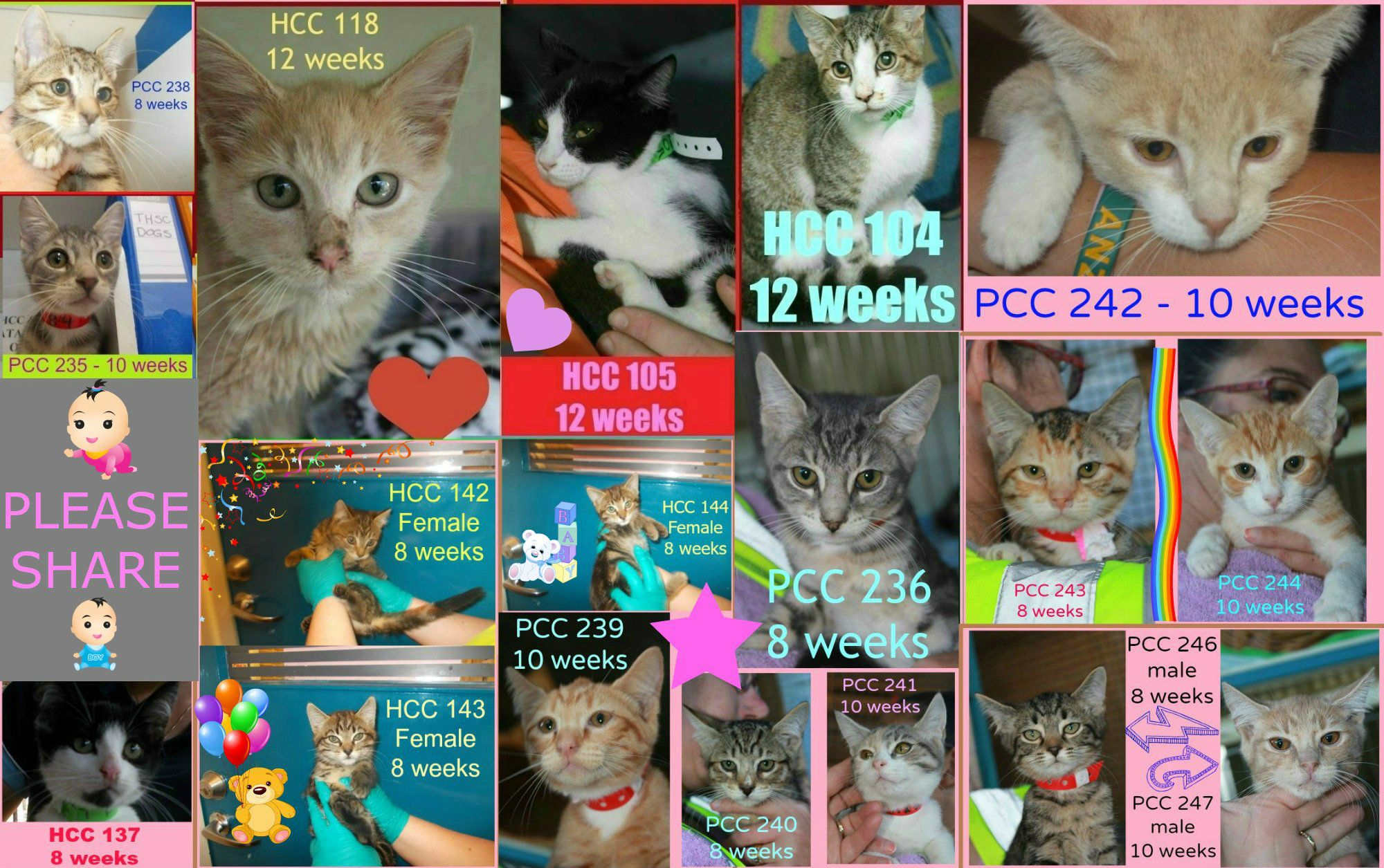 Hawkesbury Pound is overloaded with kittens that are in