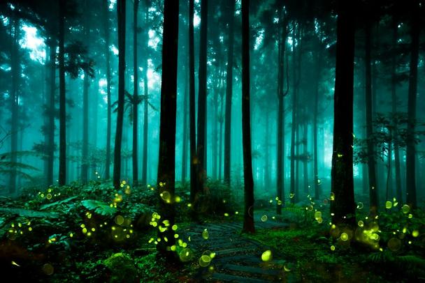 Fireflies Glowing Summer Forest At Night Landscape Photo Cool Wall Decor Art Print Poster 36x24 Night Forest Night Landscape Forest Mural