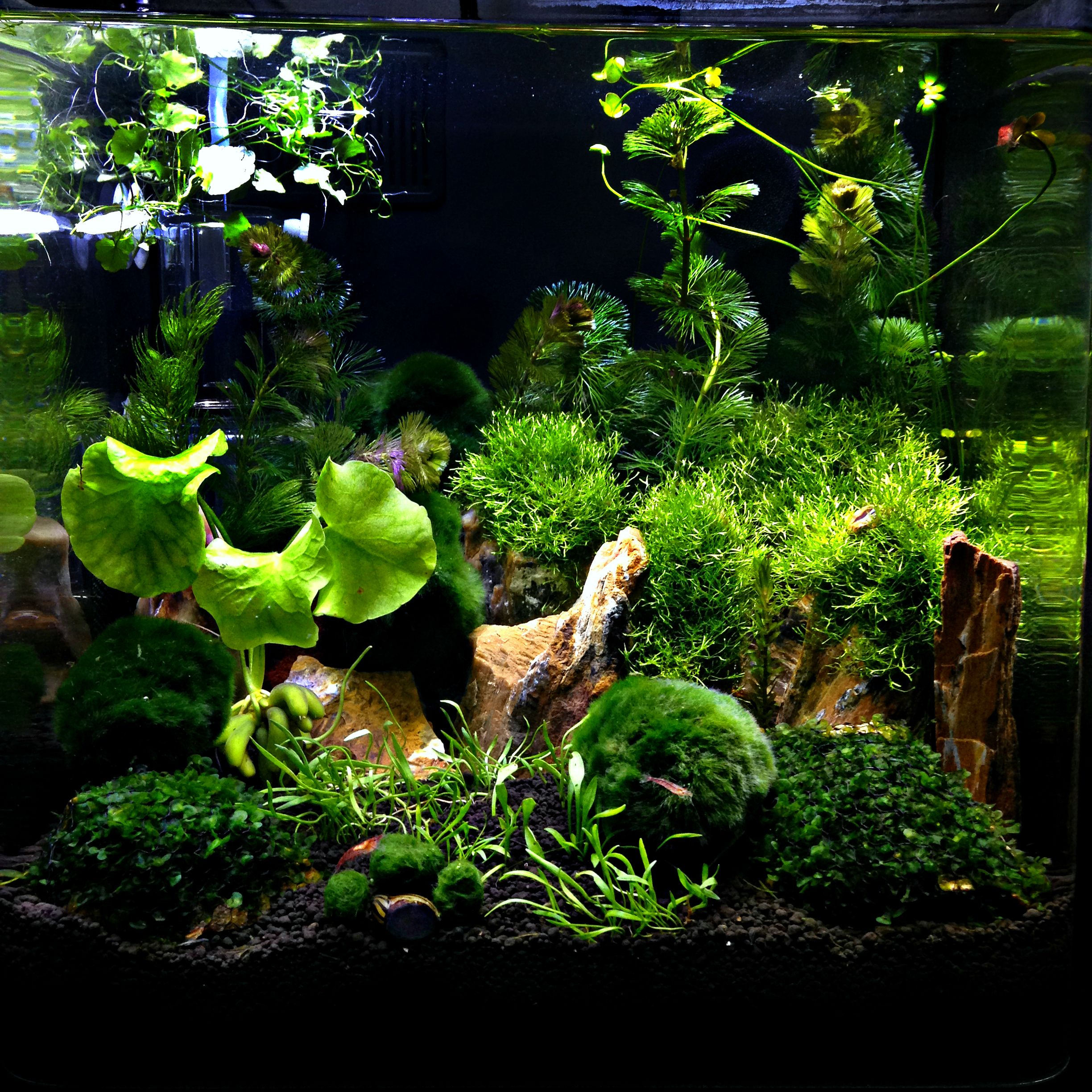 Freshwater Aquascape: Planted Nano Tank: Aqueon Evolve 8 Gallon Aquarium