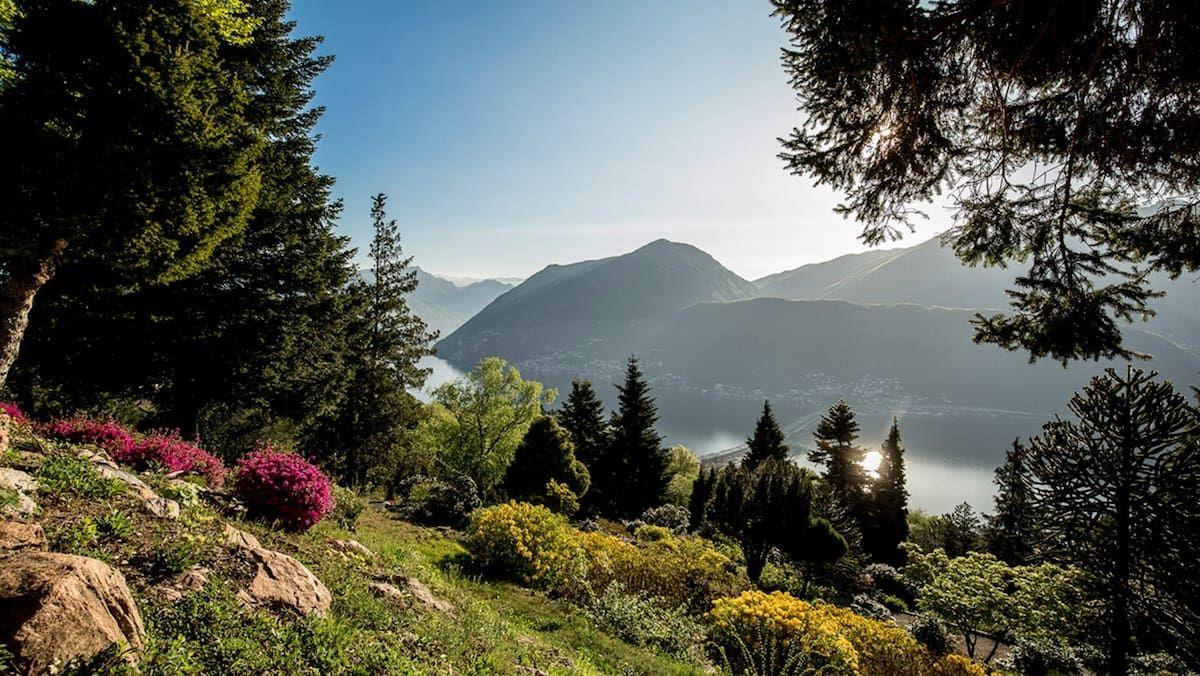 Faszinierende Pflanzenwelt Die 10 Schonsten Botanischen Garten Der Schweiz In 2020 Botanischer Garten Pflanzenwelt Exotische Pflanzen