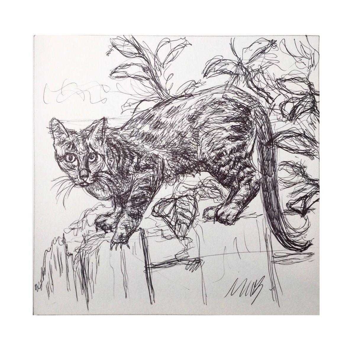 Decided to do an inktober of cats. Day 1 #inktobercats #inktobercat #inktober2020 #inktober #inkdrawing #inkdrawings #inkonpaper #catsofinstagram #catdrawing #inktobercatho2019 #mycreativity #myartwork🎨 #🎨 #🎨🎨🎨 #artlovers #instadrawing #instaink #ink_art_gallery #artistsoninsta #artistsofinstagra