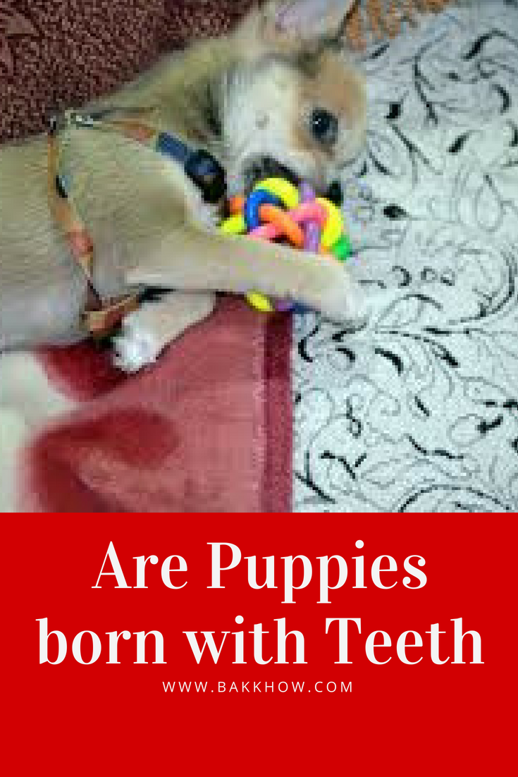Are puppies born with teeth? Puppies, Dogs, puppies, Teeth