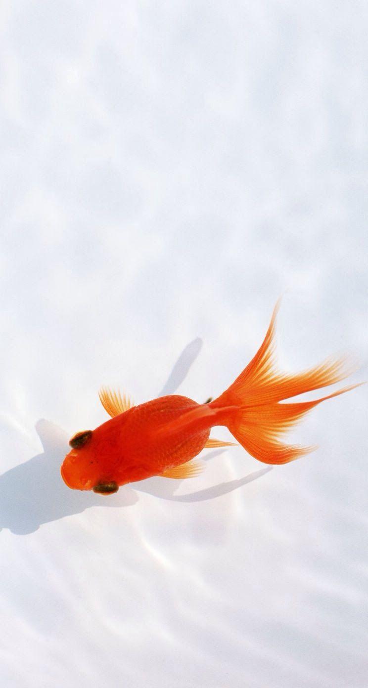 Wallpaper iphone fish - Explore Iphone 5 Wallpaper Iphone 5s And More