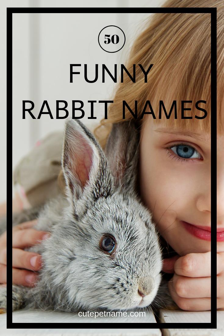 50 Cool And Funny Rabbit Names And Pet Naming Guide Cute Pet Name Cute Pet Names Rabbit Names Female Rabbit Names