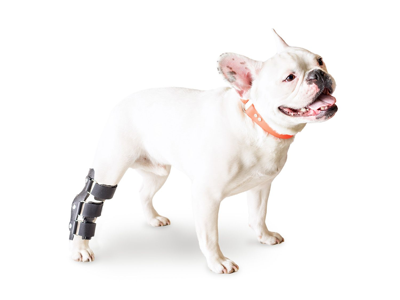 Hock Splint For Dogs Walkin Hock Splint Handicappedpets Dog