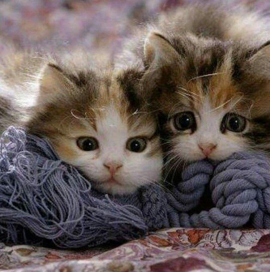 Grandma Is Looking For You Cute Cartoon Animals Cats Cute Animal Videos