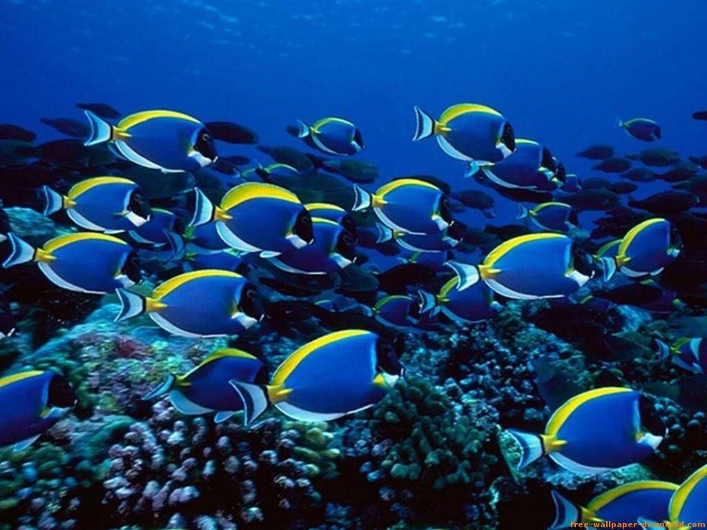 Peces de agua salada 4 animales pinterest peces de for Buscador de agua