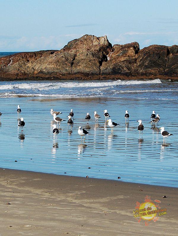 Navegantes Santa Catarina fonte: i.pinimg.com