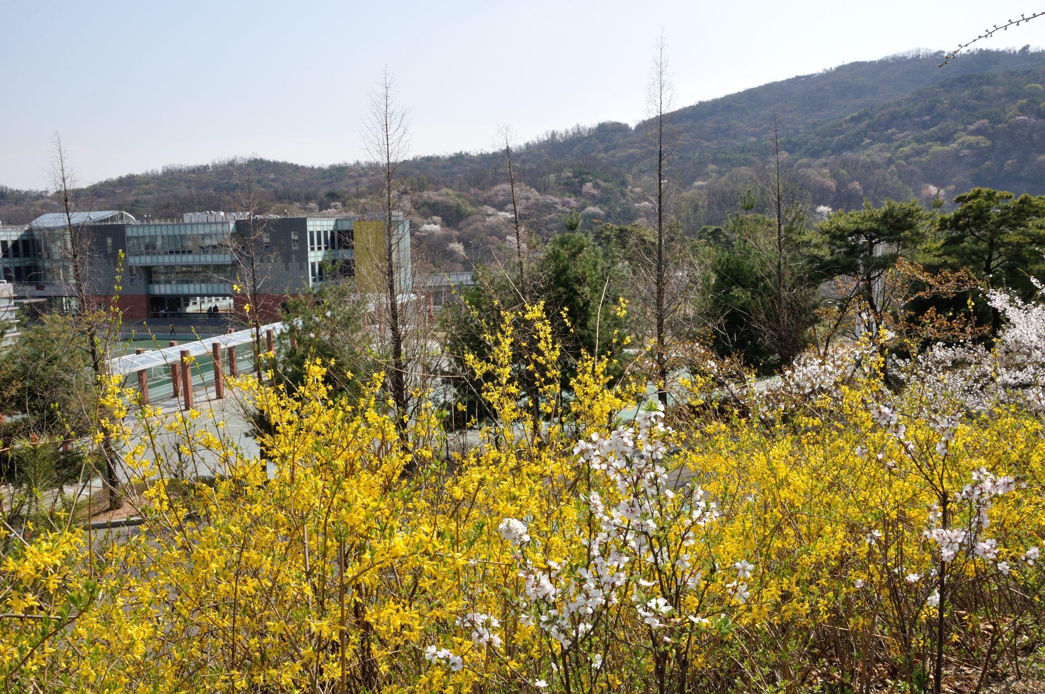 Student Union Blg and Bukaksan Mountain 정문 언덕길에서 바라본 복지관과 북악산
