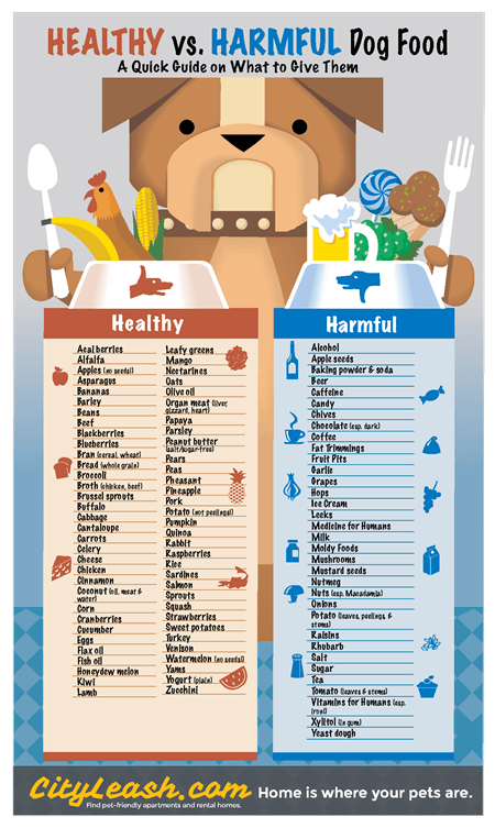 healthy and harmful dog foods poster cityleash com