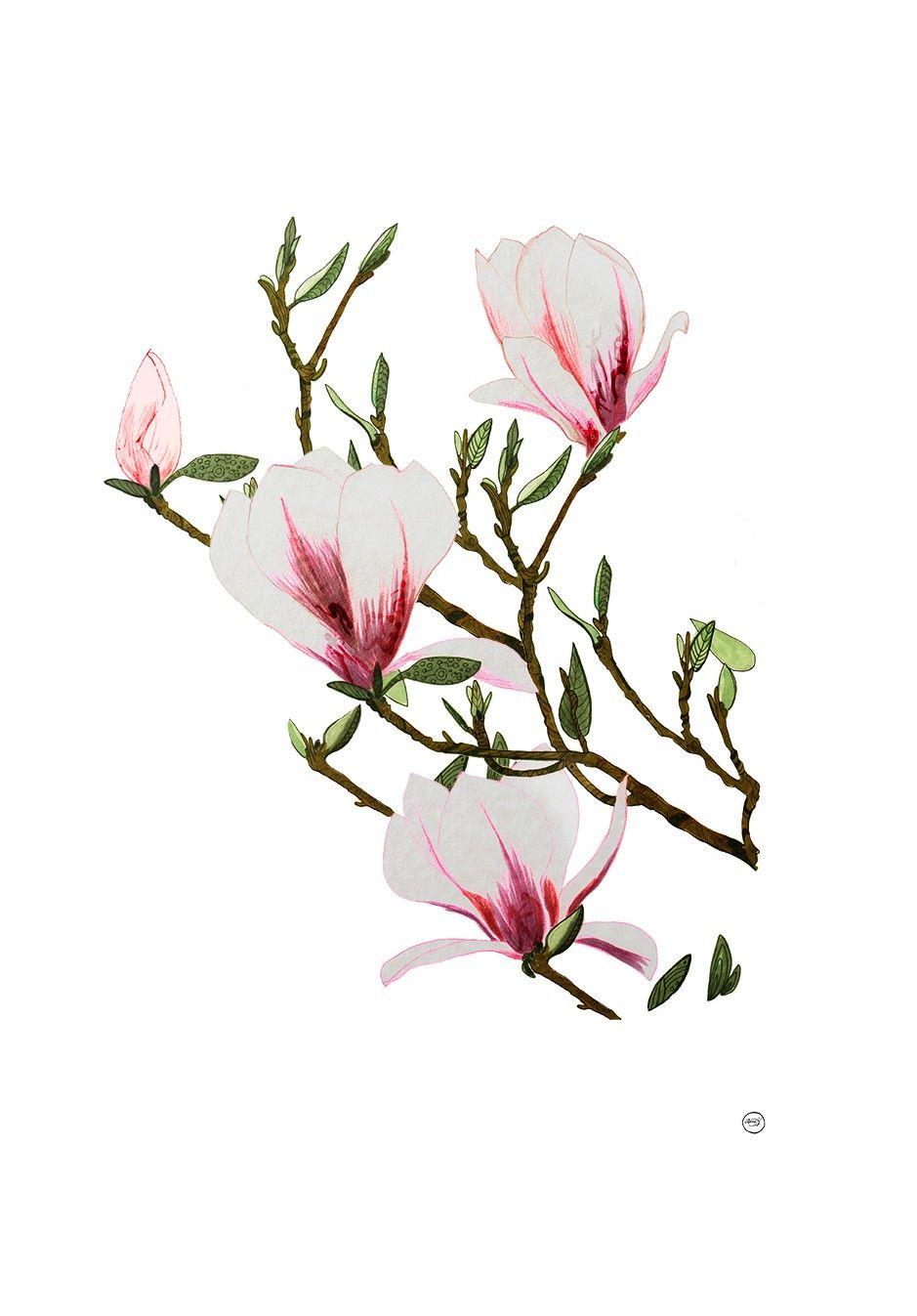 Vårkärlek, Magnolia 50x70 cm via Art prints, Anna Handell. Click on the image to see more!