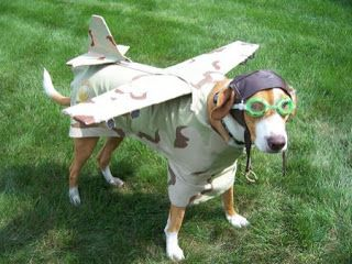 dog dressed up as a army plane