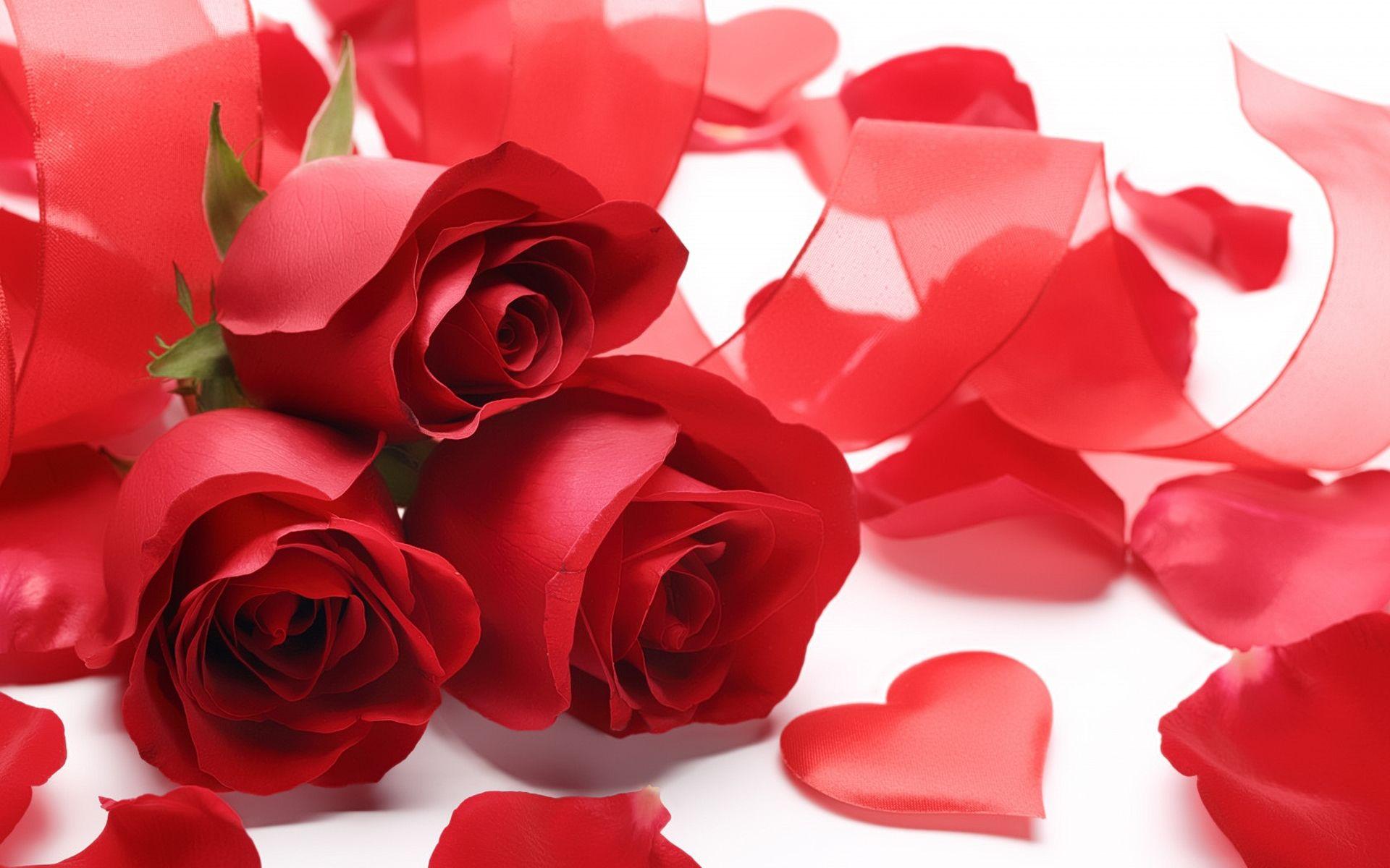 Hd wallpaper red rose - Romantic Red Rose Love Hd Wallpaper Red Pinterest Romantic